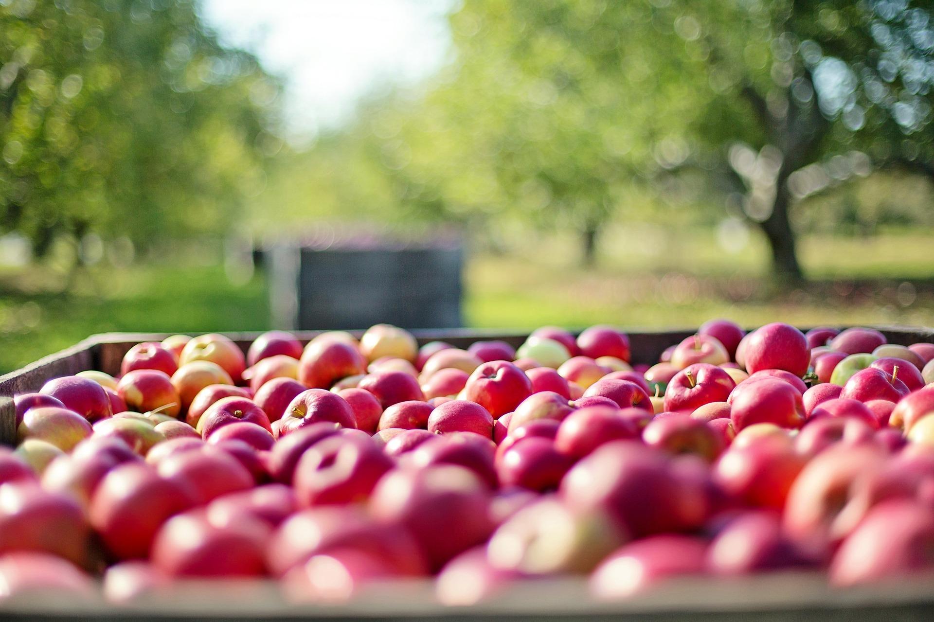 Äpfel Mecklenburg Hotel Grabow