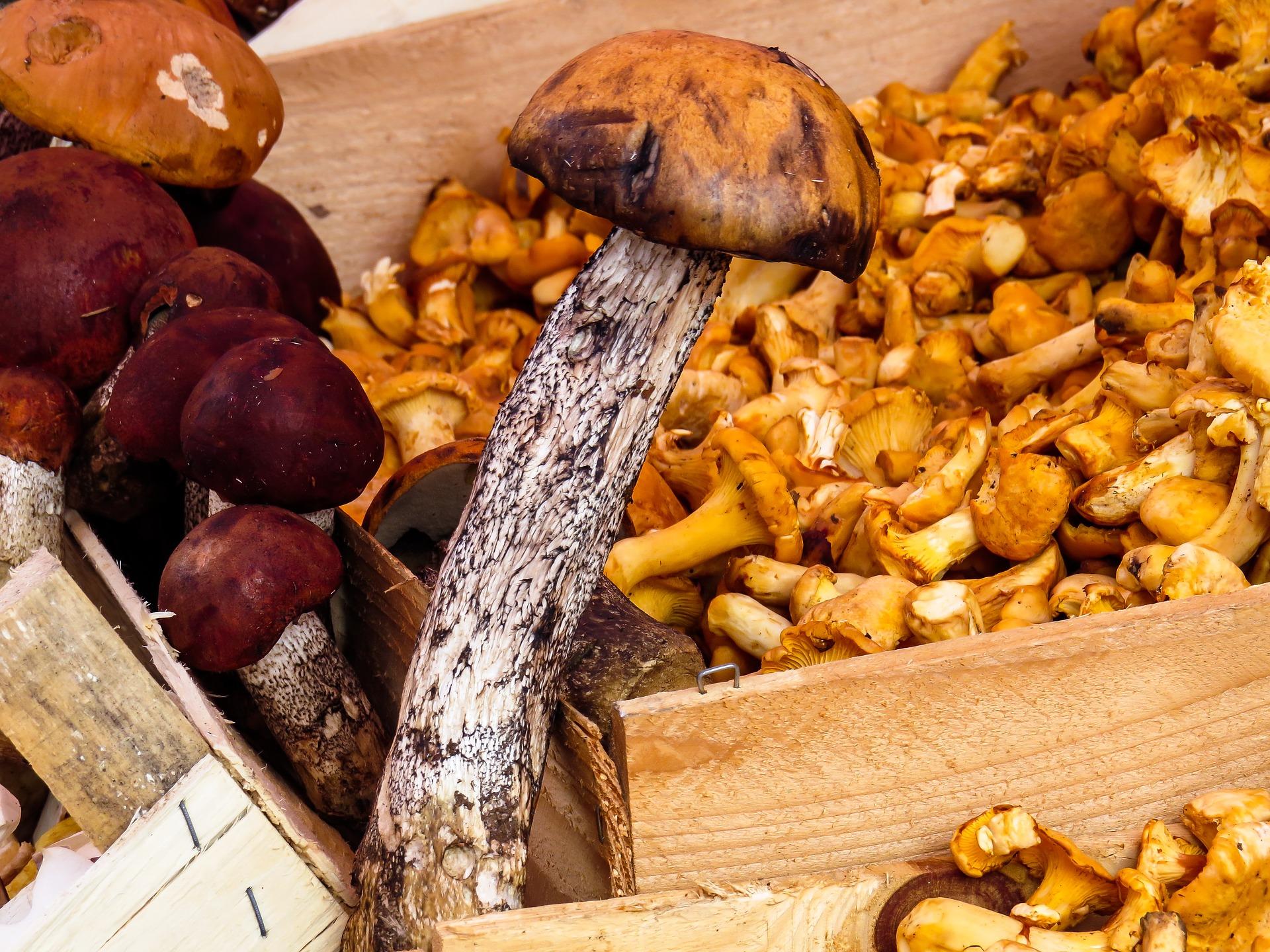 Pilze aus dem Mecklenburger Wald Foto Gellinger